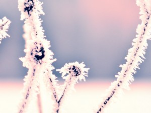 problemas-salud-invierno